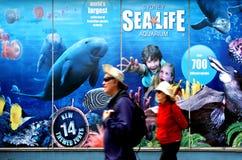 海洋生活悉尼水族馆悉尼新南威尔斯澳大利亚 库存照片