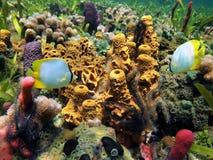 海洋生活的水下的颜色 免版税库存照片