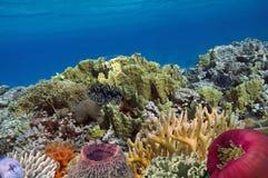 海洋生活鱼水下的风景马尔代夫我 免版税库存照片