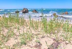 海滩的原野 库存照片