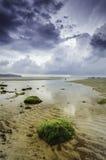 海藻的图象在岩石的 在清楚的水的反射 剧烈和黑暗的云彩 库存图片