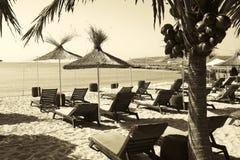 海滩的太阳懒人 免版税库存照片