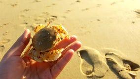海滩的夫人与在她的手指的微小的螃蟹少量 早晨在Pa薯类海岛 免版税库存图片