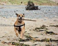 海滩的奥斯卡 免版税库存照片