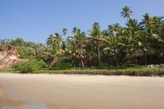 海滩的棕榈树丛。 免版税库存图片