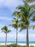 海滩的棕榈 库存图片