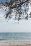 海滩的植物 免版税库存照片