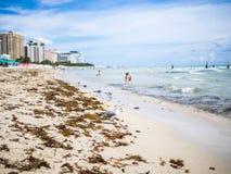 海滩的海鸥 免版税库存图片