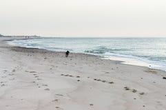 海2的狗 库存照片