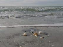 海洋的珍宝 免版税库存照片