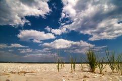海滩的里德 免版税图库摄影
