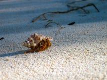 海滩的隐士 免版税库存照片