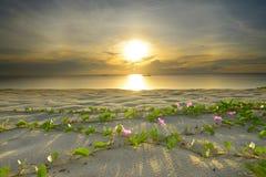 海滩的风景 库存图片