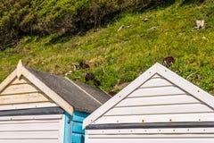 海滩的,对夏天村庄的五颜六色的门, s色的房子 免版税库存图片