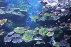 海洋的水下的世界 库存照片