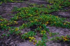 海滩的绿色植物 库存照片