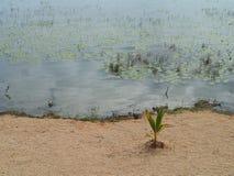 海滩盐水湖Bacalar墨西哥湖全景小屋 免版税库存图片
