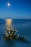 从海洋看见的月亮 库存图片