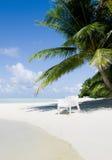 海滩睡椅在一个热的下午的一棵棕榈树下 库存图片