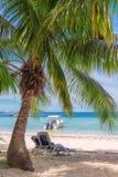 海滩睡椅在热带海滩的一棵棕榈树下 库存图片
