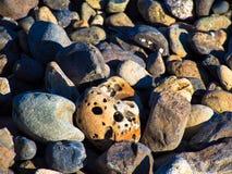 海滩石头的各种各样的类型 免版税库存图片