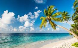 海滩美丽的马尔代夫 免版税库存照片