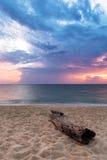 海滩老树干 免版税图库摄影