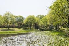 海滨绿色树和莲花叶子 免版税库存照片