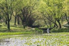 海滨绿色树和莲花叶子 图库摄影