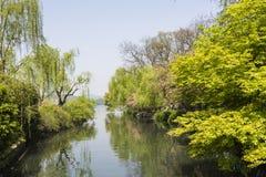 海滨绿色树 库存图片