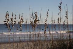 海滩花 库存照片