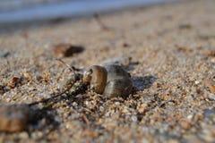 海滩茫然 免版税库存照片