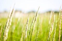 海滩草在南卡罗来纳 库存照片