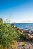 海滩草漂流木头 免版税库存照片