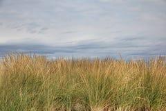 海滩草背景 库存图片
