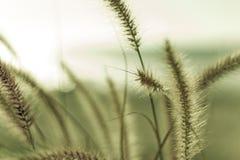 海滩草 库存图片