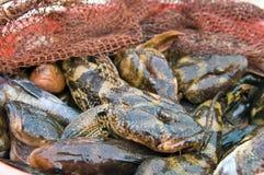 海洋虾虎鱼海洋捕鱼战利品 库存照片