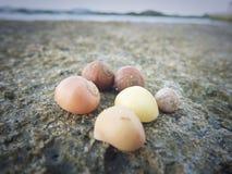 海洋蜗牛、壳和石头在海滩 库存照片
