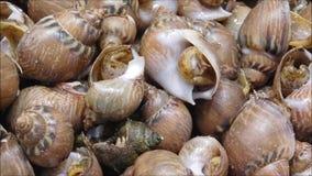 海洋蜗牛纹理  影视素材
