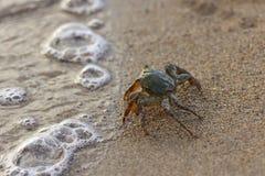 海滩螃蟹 库存照片