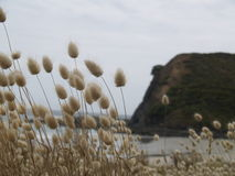 海滩观看NZ 免版税库存图片