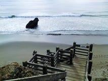 海滩足迹台阶 免版税图库摄影
