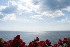 海洋遇见天空-与花的天际视图 库存图片