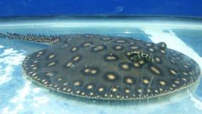 海洋野兽 免版税库存照片