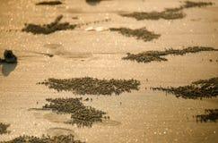 海滩金黄沙子 免版税图库摄影