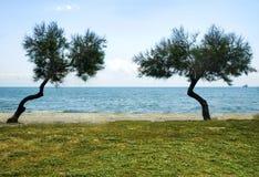 海滩风景、海、沙子、太阳&树 库存图片