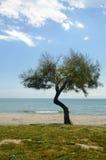 海滩风景、海、沙子、太阳&树 库存照片