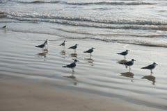 海滩鸟和海鸥 免版税库存照片