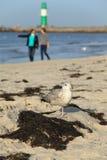 海滩鸟 库存照片