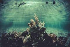 海绵,小珊瑚礁生态系 免版税库存照片